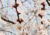 piękny ogród na wiosnę
